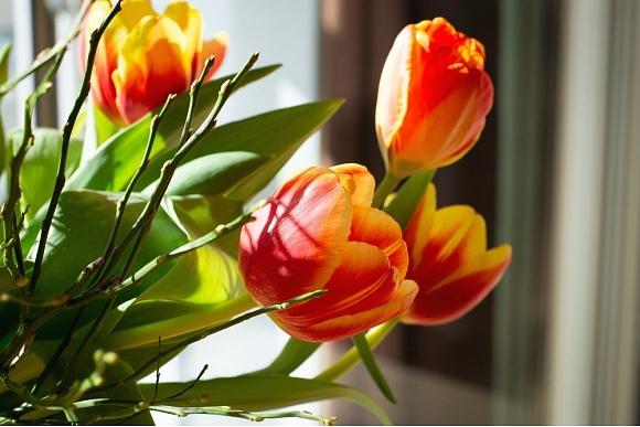 pavasara_sajuta_majas
