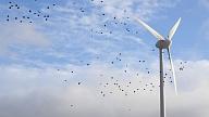 Vides pārraudzības valsts birojs Dobeles un Tukuma vēja parkos ļauj izvietot 35 vēja turbīnas