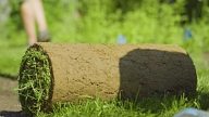 Paklājzāliens – ātrākais veids, kā iegūt skaistu mauriņu