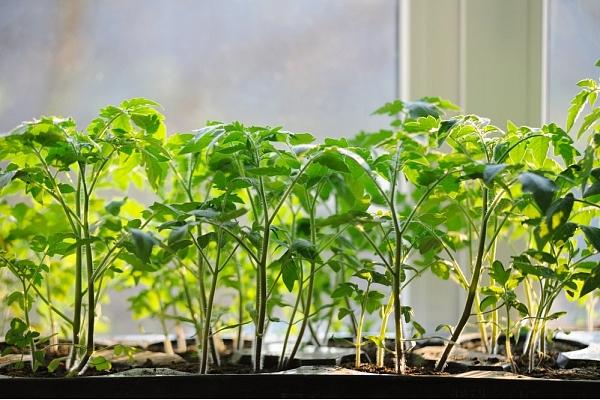 Kādus dārzkopības darbus var veikt jau februārī? Stāsta augu eksperte