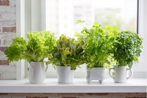 Pavasara vēstnesis – dārzs uz palodzes: Ko un kā sēt?