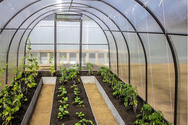 Kāda siltumnīca būs īstā tavai dobei, dārzam vai balkonam? Stāsta eksperts