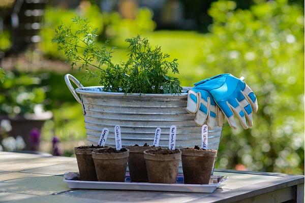 5 dārza darbi maija sākumam
