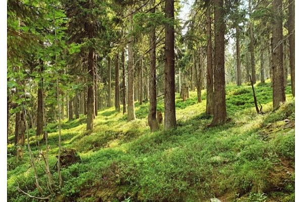 """Grozījumi """"Meža likumā"""" dos attīstības iespējas 25 VNĪ pārvaldītajiem valsts īpašumiem"""