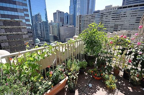 Dārzs uz mājas jumta
