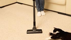 6 veidi, kā attīrīt paklāju no mājdzīvnieku spalvām