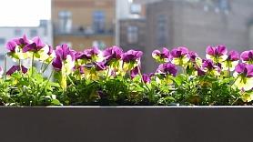 Kā uz balkona izveidot mazdārziņu? Iesaka dizainere