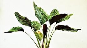 5 istabas augi, kam nav nepieciešama īpaša kopšana