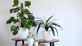 5 viegli kopjami iekštelpu augi mājokļa izdaiļošanai