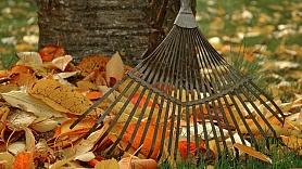 Kā izmantot dārzā nokritušās koku lapas?