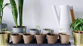 Kā izveidot dārzu pilsētas dzīvoklī?