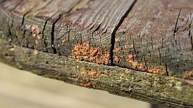 Kā likvidēt un turpmāk pasargāt koka konstrukcijas no sēnītes?