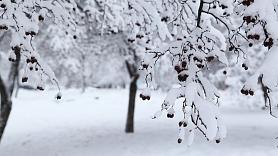 Kā pasargāt augļu dārzu no ziemas sala radītiem bojājumiem? Skaidro eksperts