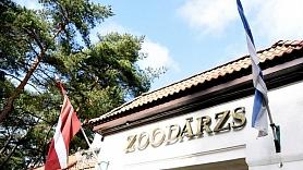 Rudenī Rīgas zooloģiskā dārzā sāks sarkano pandu mītnes pārbūvi