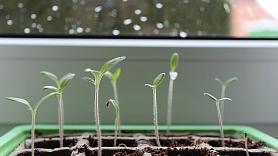 5 padomi, kā rūpēties par balkona un palodzes dārziņu
