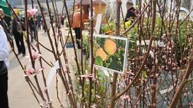 No 16. līdz 19. aprīlim Ķīpsalā notiks četras pavasara izstādes