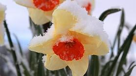 Kā aukstumā pasargāt dārzu? Skaidro speciālists
