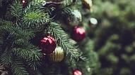 8 idejas, ko iesākt ar eglīti pēc svētkiem