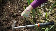 Dārza darbi, kas jāveic pavasara sākumā