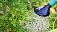 Kā novērst mitruma deficītu augsnē un izglābt sausuma apdraudētos stādus? Iesaka eksperts