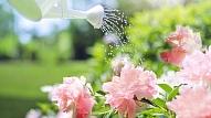 Kā pareizi laistīt dārzu? Iesaka eksperts