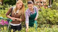 Kas jāņem vērā, izvēloties jaunu augu savam dārzam?