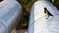 Pabeigta būvprojekta izstrāde siltumenerģijas pārvades sistēmas pārbūvei Valmierā