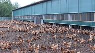 Izsludināta sabiedriskā apspriešana par vistu novietņu kompleksa un olu produktu ražotnes izveidi Madlienas pagastā