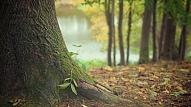 Rīgā turpinās jaunu koku stādīšana un apstādījumu kopšana