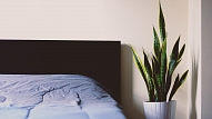 8 labākie telpaugi tavam interjeram