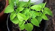 9 augi, kas attīra gaisu