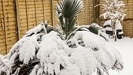 Dārza sagatavošana ziemai 2.daļa