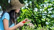 Dārzkopības tendences Latvijā