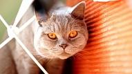 Deviņas mājdzīvniekiem bīstamas vietas mājā