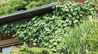 Eksotiski augi, kurus vari izaudzēt savā dārzā