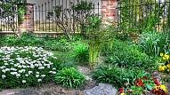 Ēncietīgie augi tavā dārzā, kas ziedēs visu vasaru