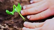 Iecienītāko stādu un sēklu TOP 10 vasaras dārzam