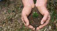 Kā atšķirt slimus augus