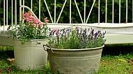 Oriģināli puķu podi pagalma dekorēšanai