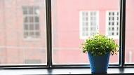 Piecu soļu plāns nonīkušu istabas augu atdzīvināšanai