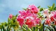 Septiņi iecienītākie ziedi šajā dārzkopības sezonā