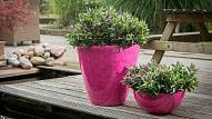 TOP 5 padomi pavasara dārzkopībā