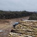 Pilns mežizstrādes cikls no cirsmu ierīkošanas līdz iegūto materiālu realizēšanas