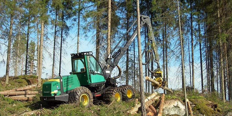 Forest taxation, forest assessment, forest, Buying of felling sites, buys forest